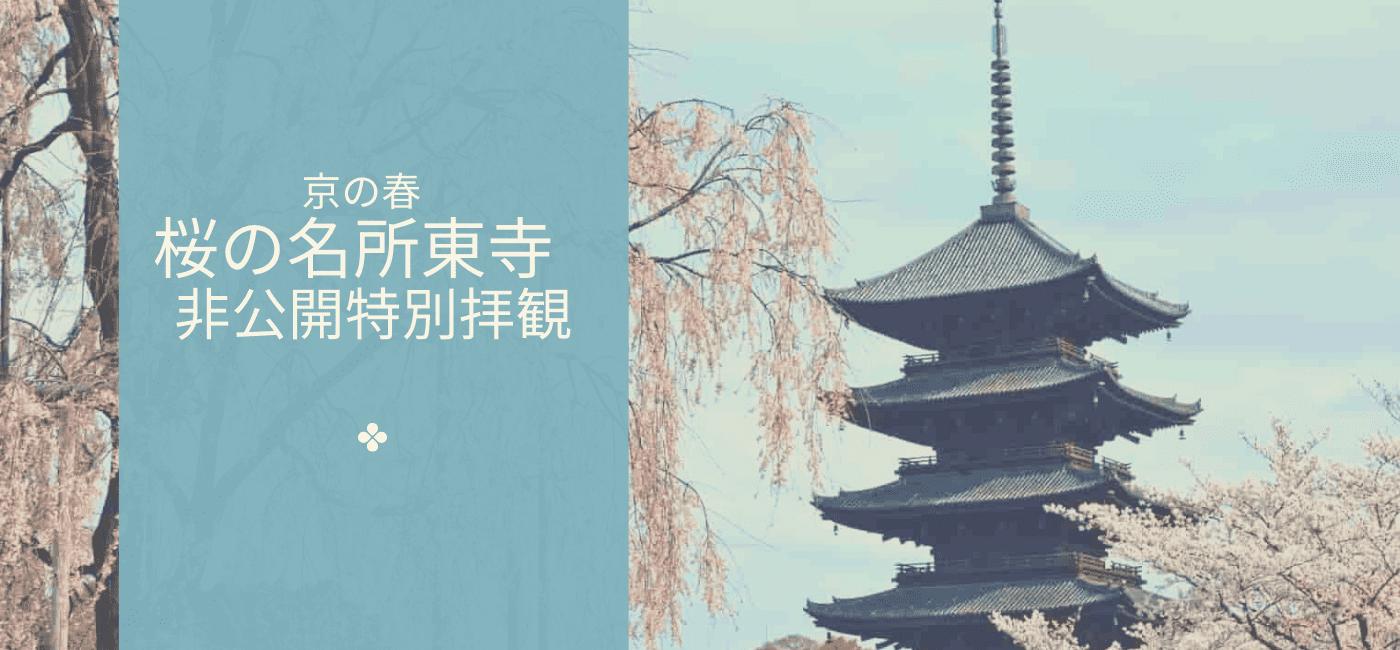 京の春 桜の名所東寺🌸非公開特別拝観